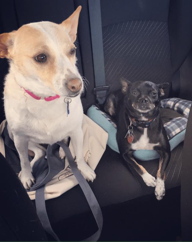 Bailey and Mambi
